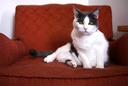 lucy-cat